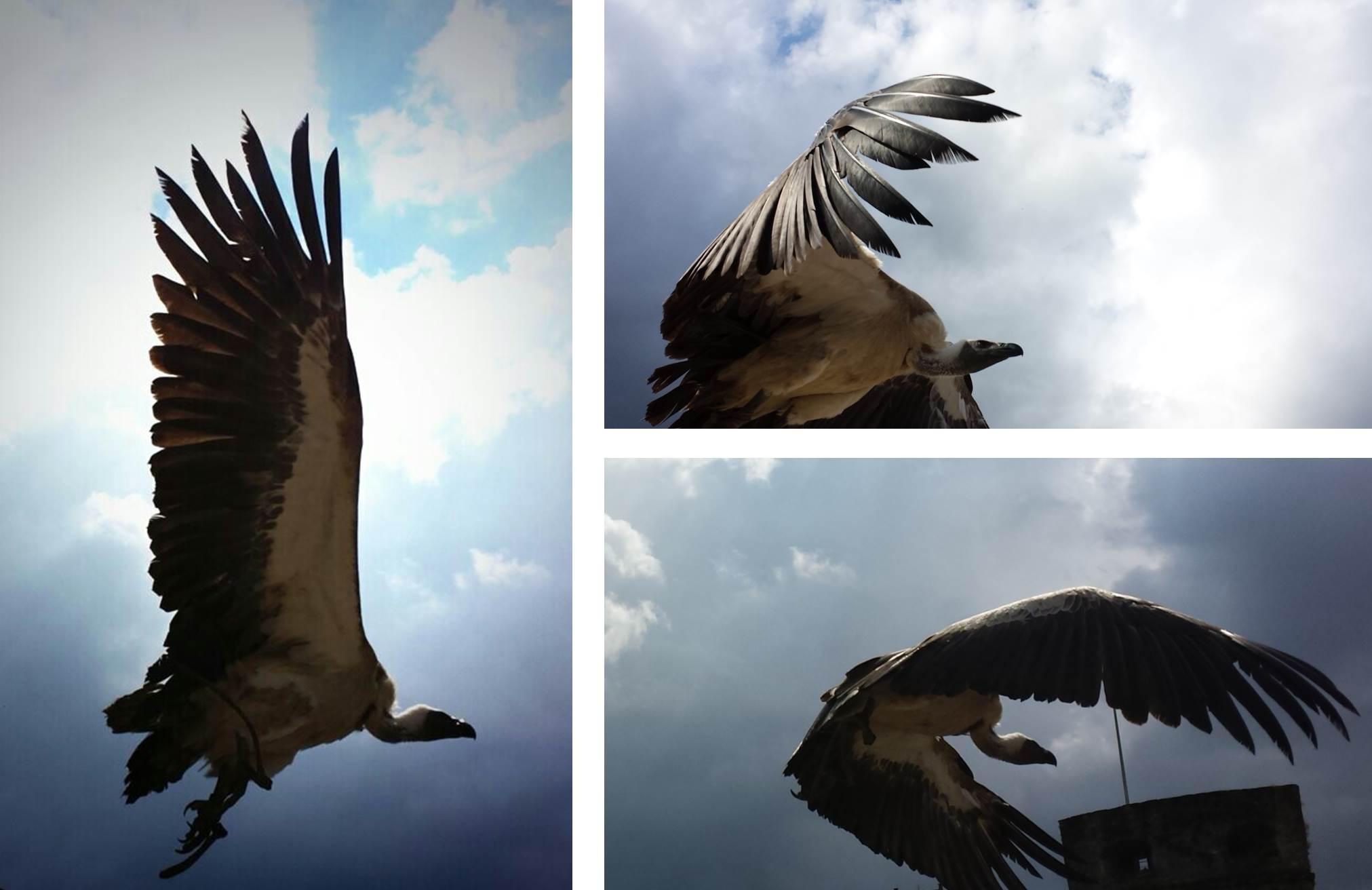 bouillon birds